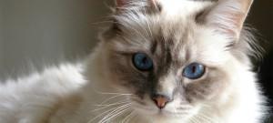 Кошачья тайна