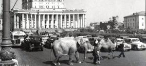 «Россия — родина слонов»