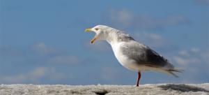 О прикармливании голубей вблизи памятников литературы